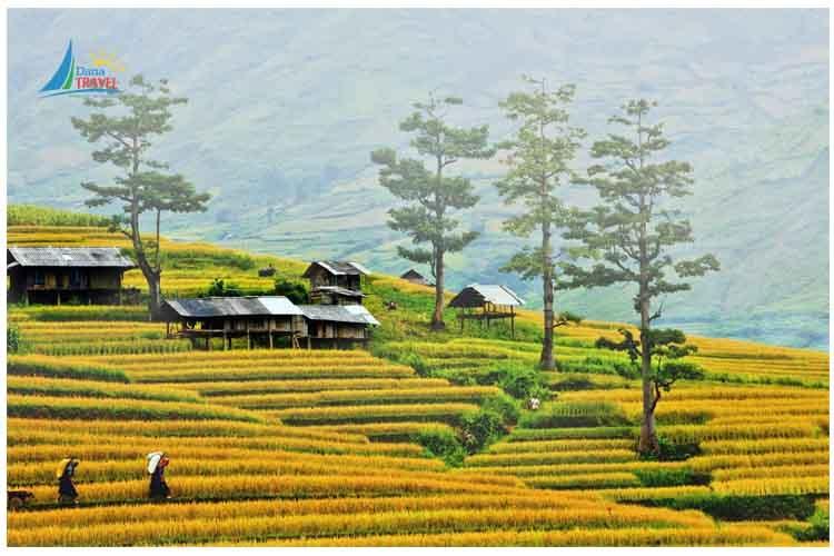 Tour Mộc Châu 2 Ngày 1 Đêm giá rẻ khởi hành hằng tuần từ Hà Nội