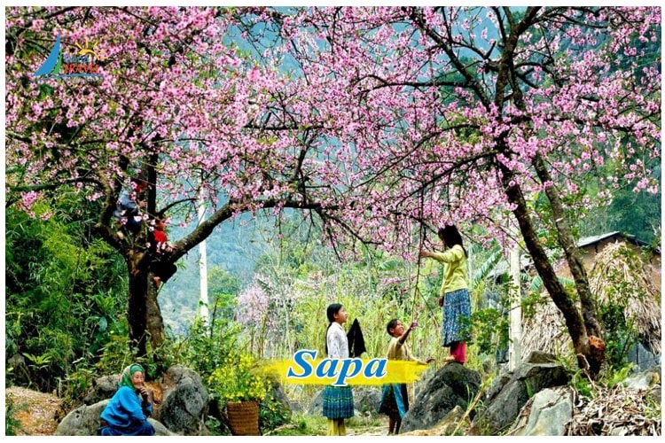 Tour du lịch Sapa 3 Ngày 2 Đêm Khởi hành hằng ngày từ Hà Nội giá rẻ chỉ từ 2.050K