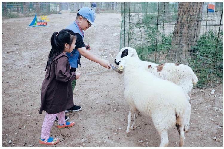 Tour tham quan Sở thú Zoodoo Đà Lạt 1 ngày giá rẻ